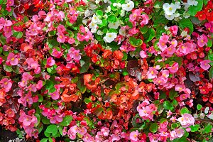 Blossoming flowerbed in the park.