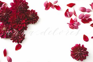 Flower Stock Photo, Dark Red Dahlias