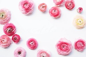 Styled Stock Photo, Pink Ranunculus