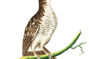 Illustration of bird