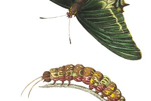Illustration of butterfly
