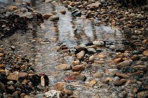 River Rocks in Gentle Stream