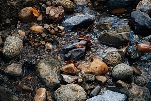 River Rocks in Winter Water