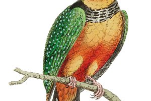 Illustration of Kingfisher