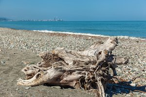 The root of the tree at the shore.