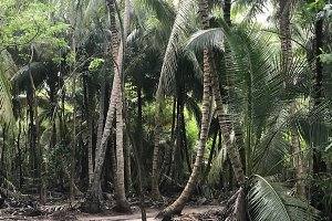 Palms grow side