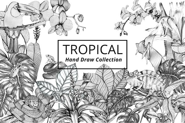 Tropical Plants & Animals Set
