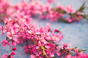 Spring flowering branches, pink flow