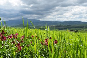 Tuscan landscape  with flowers