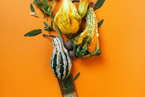 creative autumn composition of pumpkins