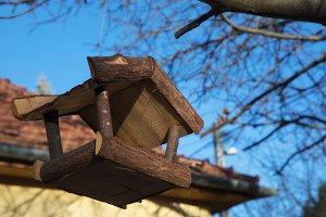 Wooden house for the birds to feed