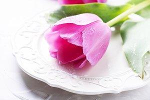 Amazing pink tulips