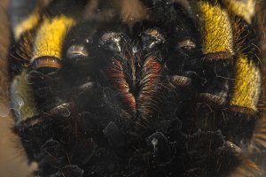 Large tarantula closeup photo