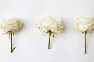 Three beautiful rose head