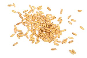oat grains isolated on white background. Top view. Flat lay