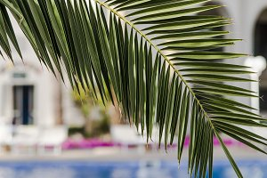 A branch of palm trees by the pool