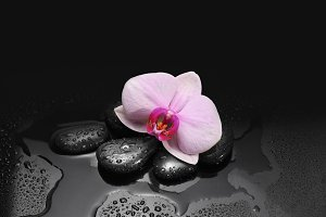 black stones and orchid