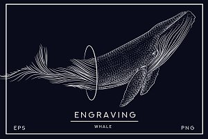 Whale. style engraving