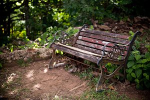 Bench in a green forest