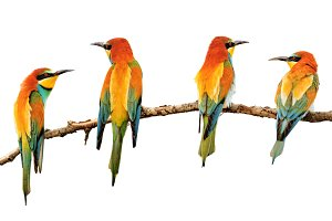 birds painted in bright colors sitting on a branch
