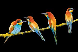beautiful exotic birds isolated on black