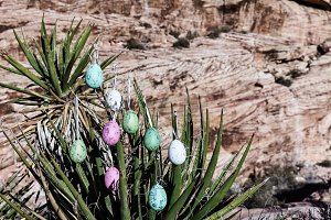 Easter Eggs On Yucca Tree