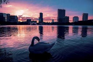 Dramatic sunset in Lake Eola Orlando