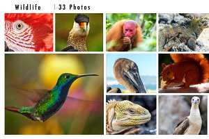 Wildlife Photo Pack