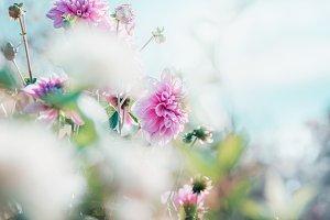 Flowers garden background