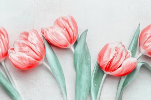 Lovely pastel red tulips bunch