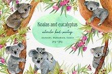 Koala & eucalyptus set illustration