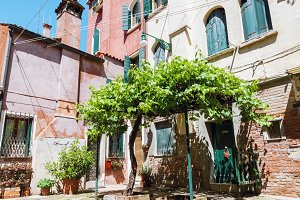 Cozy yard with grape tree in Venice