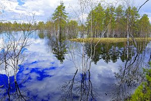 Flood in the taiga of Western Siberia