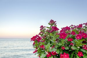 flowers with the sea