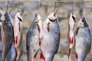 fish ram is hanging on wire