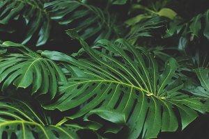Big Jungle Leaves