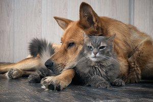 A large dog sleeps on a small dissatisfied cat