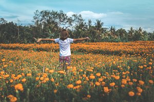 Pretty woman stands in marigold field in the valley. Tropical island of Bali, Indonesia.