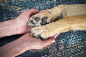 Human hands gently holding the dog's paws