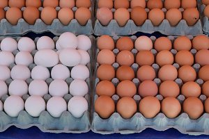 Brown White Eggs