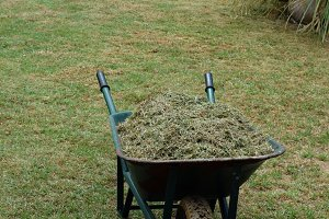 Lawn Mower Cut Grass