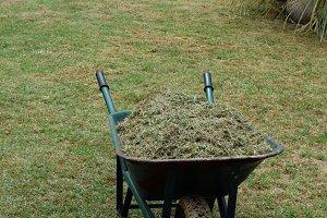 Lawn Mower Cut Grass