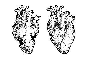 Hearts - Vector