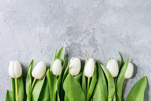 White tulips over grey