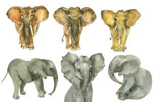 Elephants watercolor set
