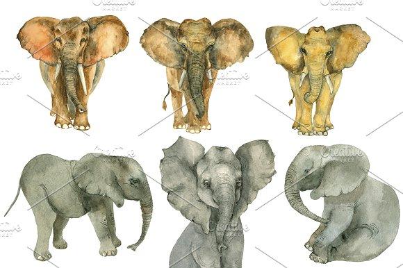 Elephants Watercolor Set