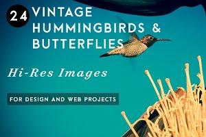 Vintage Hummingbirds & Butterflies