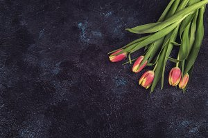 Tulips on darken concrete background
