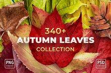 Autumn Leaves Bundle - Cut Out