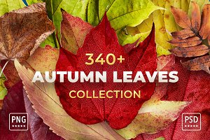 Autumn Leaves Bundle - Cut Out